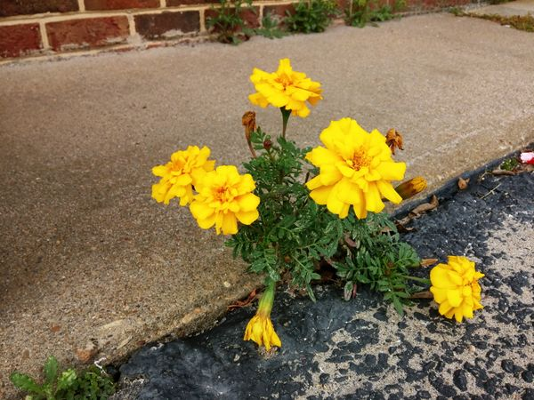 One must always hope that in the adversity of one's neglected crevices, something of beauty flourishes.